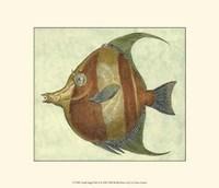Small Angel Fish II Fine-Art Print