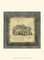 Mini Exotic Coral I Fine-Art Print