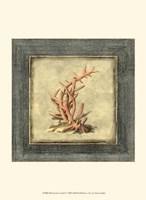 Mini Exotic Coral IV Fine-Art Print