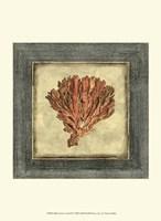 Mini Exotic Coral XI Fine-Art Print