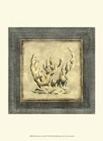 Mini Exotic Coral XII Fine-Art Print