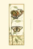 Mini Tandem Butterflies III Fine-Art Print