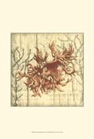 Small Coral Impressions II Fine-Art Print