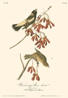 Wandering Rice Bird Fine-Art Print