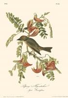 Pipiry Flycatcher Fine-Art Print