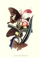 Butterflies and Flora I Fine-Art Print