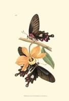Butterflies and Flora II Fine-Art Print
