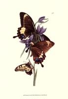 Butterflies and Flora III Fine-Art Print
