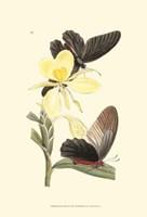 Butterflies and Flora IV Fine-Art Print