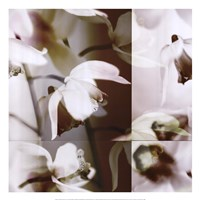 Cymbidium Orchid I Fine-Art Print