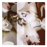 Cymbidium Orchid II Fine-Art Print
