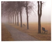 Foggy Day Fine-Art Print