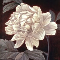 Full Bloom I Framed Print