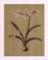 Botanica Verde I Fine-Art Print