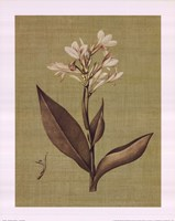 Botanica Verde II Fine-Art Print