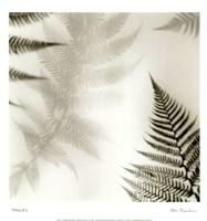Ferns No. 2 Fine-Art Print