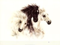 Horses Fine-Art Print