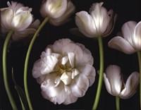 Tulip Garden Fine-Art Print