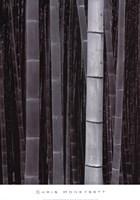 Bamboo #4, Kyoto Fine-Art Print