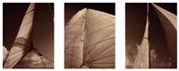 Windward Sails Triptych Fine-Art Print