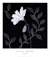 Levisia Fine-Art Print