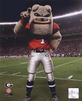 The Univserity of Georgia Bulldogs Mascot 2007 Fine-Art Print