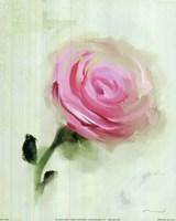 Pink Rose Fine-Art Print