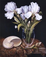 White Iris with Shell Fine-Art Print