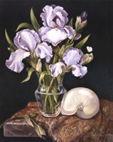 Purple Iris with Shell Fine-Art Print