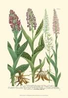Lilac Blooms I Fine-Art Print