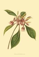 Tropical Ambrosia III Fine-Art Print