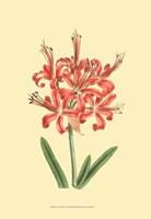 Le Fleur Rouge I Fine-Art Print