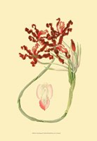 Le Fleur Rouge II Fine-Art Print
