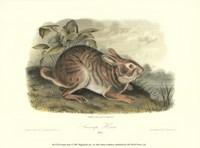 Swamp Hare Fine-Art Print