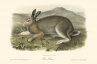 Polar Hare Fine-Art Print