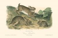 Grey Rabbit Fine-Art Print