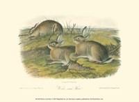 Worm-wood Hare Fine-Art Print