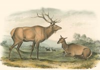 American Elk and Deer Fine-Art Print