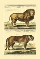 Lion and Tiger Fine-Art Print