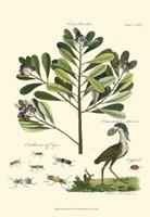 Naturalist Study II Fine-Art Print