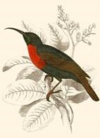 Hummingbird III Fine-Art Print