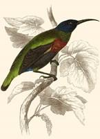 Hummingbird IV Fine-Art Print