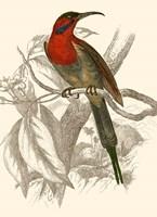 Hummingbird VI Fine-Art Print