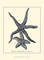 Indigo Starfish I Fine-Art Print