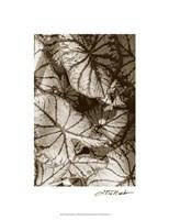 Garden Textures IV Fine-Art Print