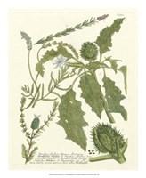 Greenery II Fine-Art Print