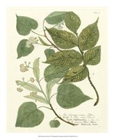 Greenery III Fine-Art Print