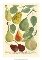 Plentiful Pears I Fine-Art Print