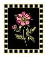 Pink Peony II Fine-Art Print