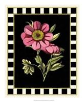 Pink Peony III Fine-Art Print